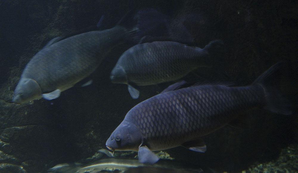 сумы рыбхоз прогноз клева