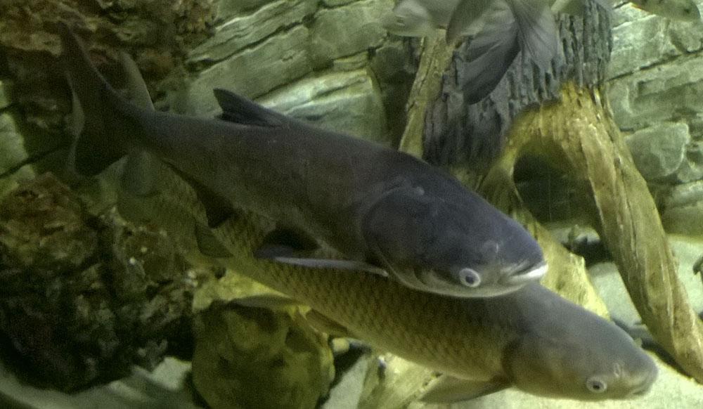 рыбалка получай карпа на воронежской об